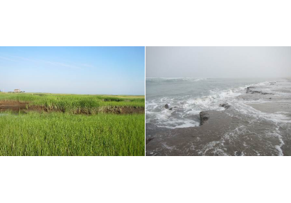 Temperate salt marshes (MA, USA). Healthy salt marshes have lush stands of grasses (left). Storms can expose peat deposits that have been buried for thousands of years (right). The fate of this soil carbon is unknown, but some fraction will be respired by microbes and returned to the atmosphere as CO2.